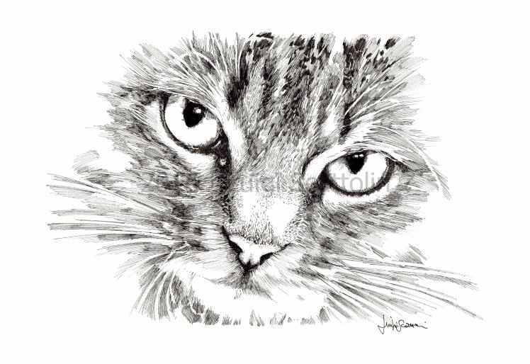 CATS_#01