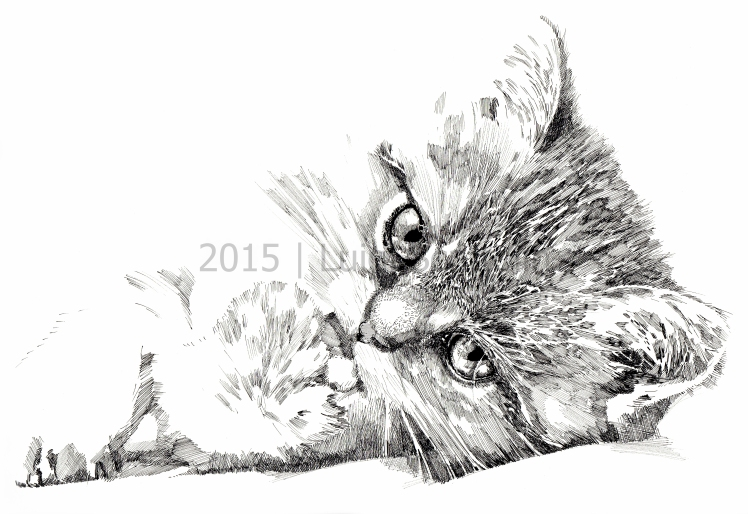 CATS_#02-2