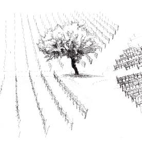 albero004